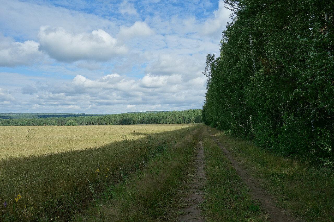 Пермский край лесов