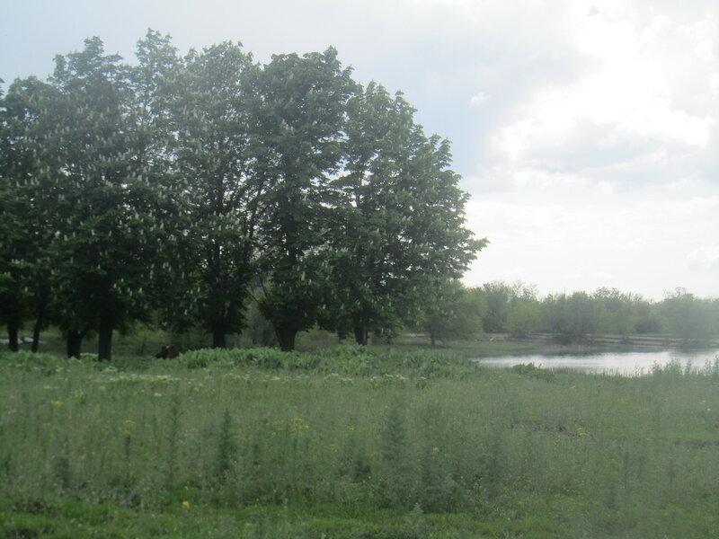 10.05.16 Дебальцево озеро Козлячье.jpg