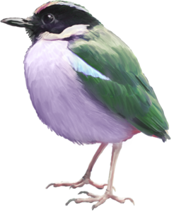 birds green