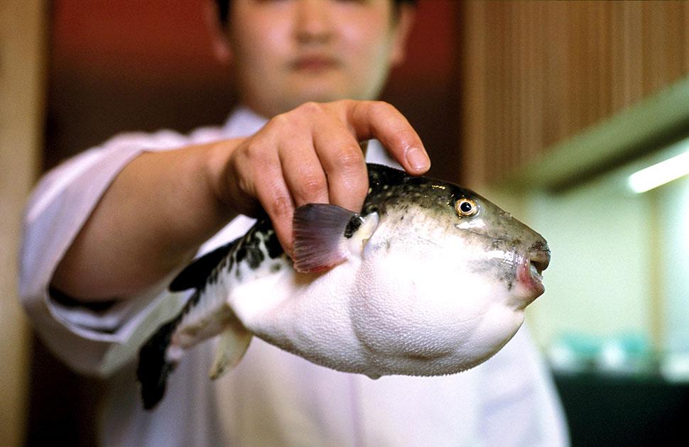 Состояние фугу Нет, мы сейчас не о рыбе, хотя на фотографии именно она. Речь идет о состоянии, когда