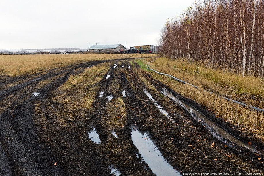 07. Все подъезды к плантациям забаррикадированы. С местными идет война. От зависти и безвыходности м