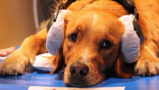 Доказано, что собаки понимают человеческий язык— Ученые