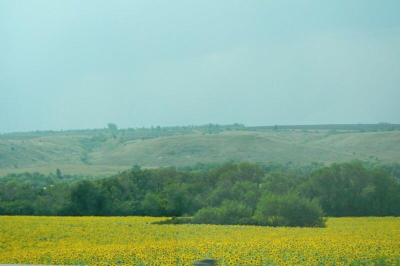 Подсолнуховые поля и холмы в Черноземье - Путешествие из Кирова в Крым на автомобиле