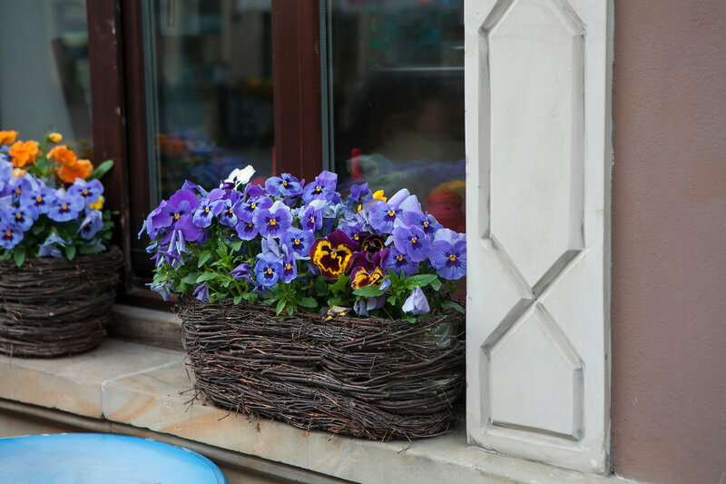the blue Violets in a wicker basket on the steps of the cafe as decoration