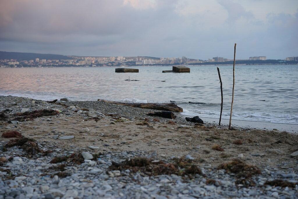 Геленджик. Водоросли и бревно на пляже с песком и галечником.