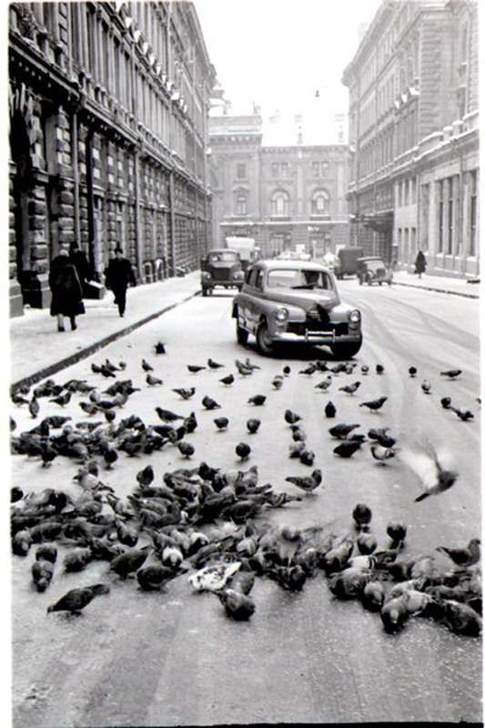 1461 Улица Петровские линии. Московские голуби 56 В. Руйкович.jpg