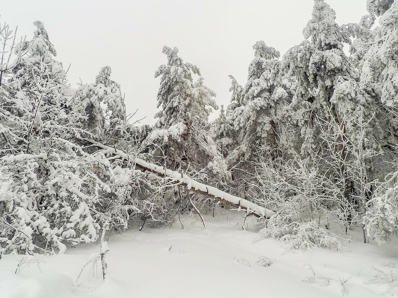 Немного снежного, с лыжных прогулок. фото 4