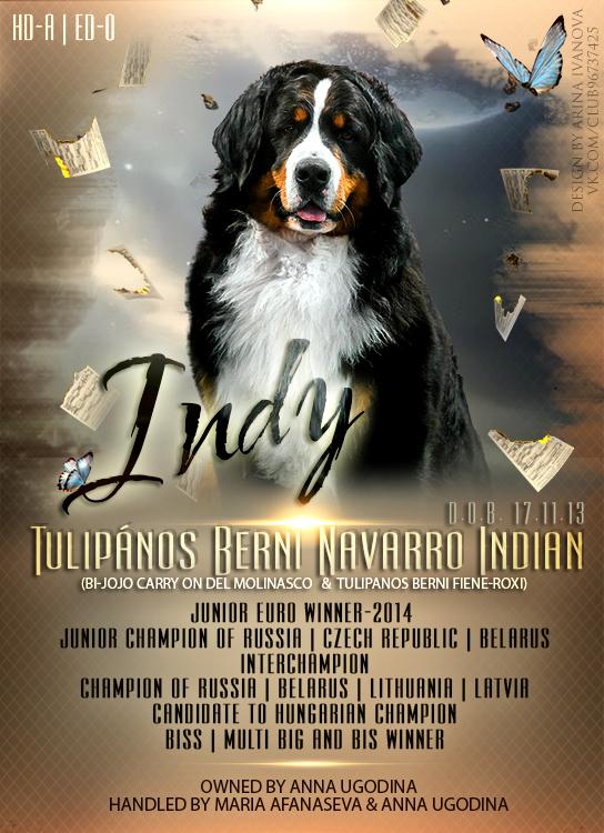 Фото-коллажи, презентации собак, анонсы вязок 0_1e85a9_7650157f_orig