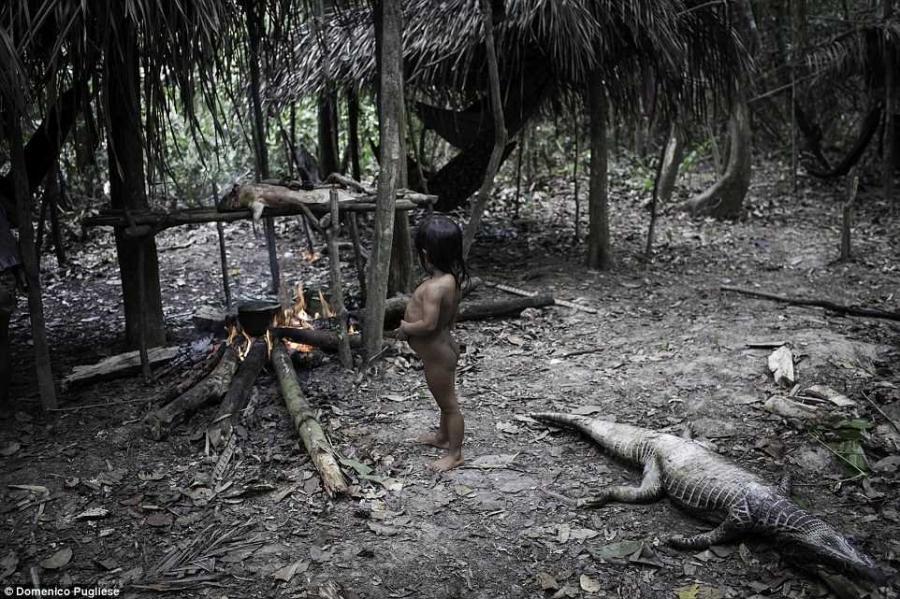 6. Приматы являются важным источником пищи для Ава, но если малыш вырос на грудном вскармливании, он