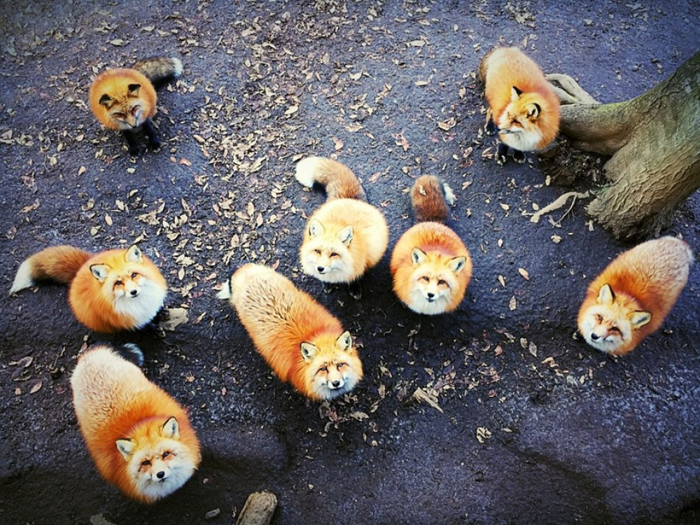 1-е место вноминации «Животные»: Erica Wu, Сан-Франциско, США