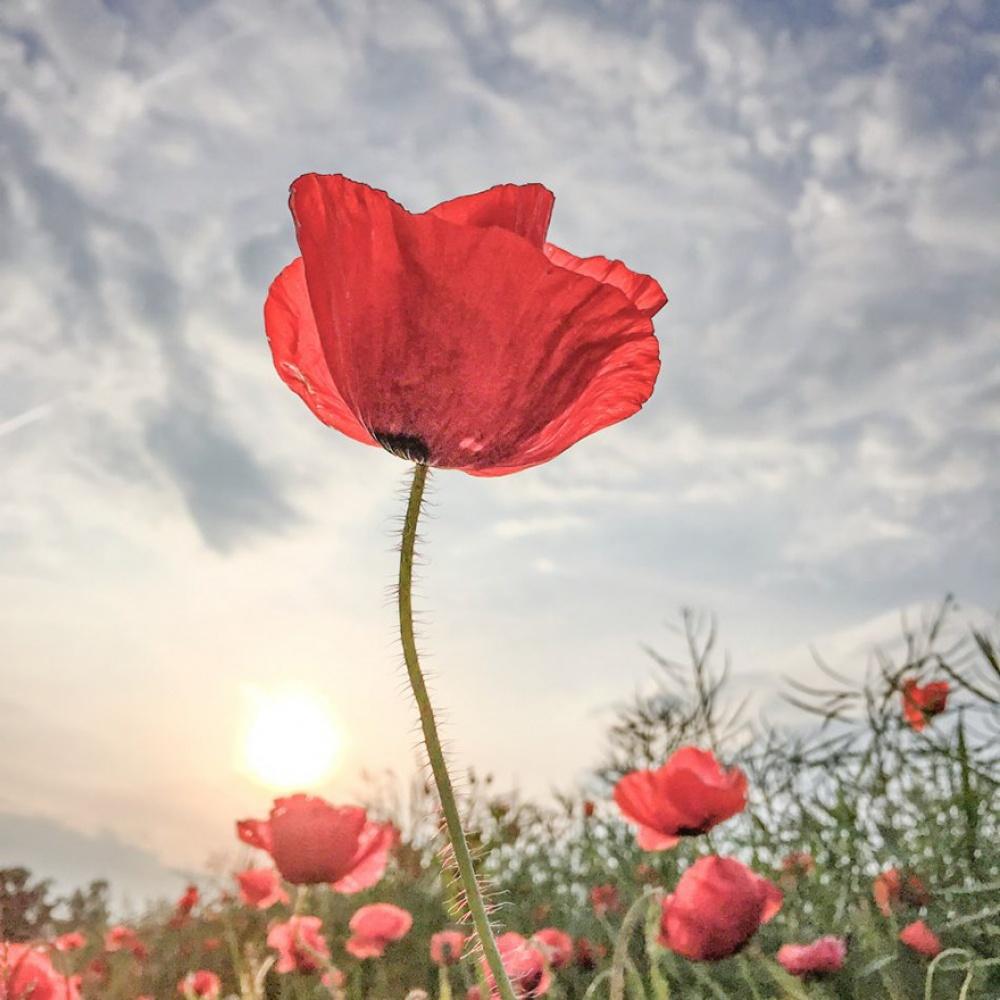 © ippawards.com  1-е место вноминации «Цветы»: Lone Bjorn, Цюрих, Швейцария
