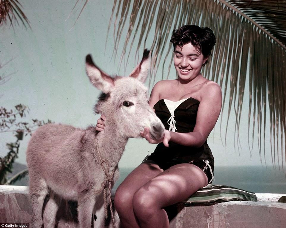 Девушка кормит осла, июль 1953 года.