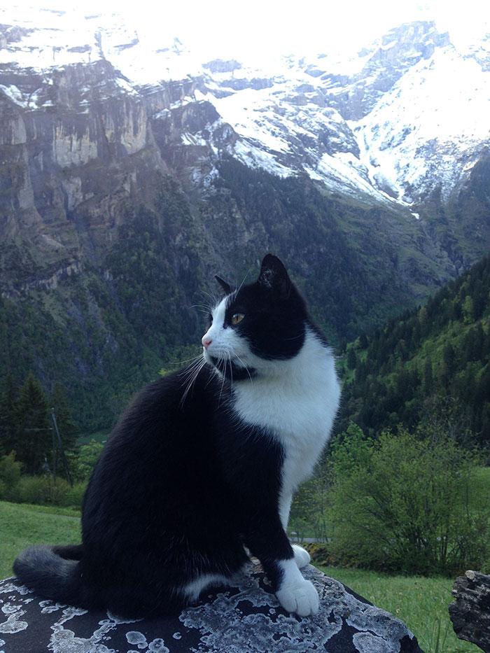 А вот и кошка, которая помогла туристу, потерявшемуся во время прогулки по горам.