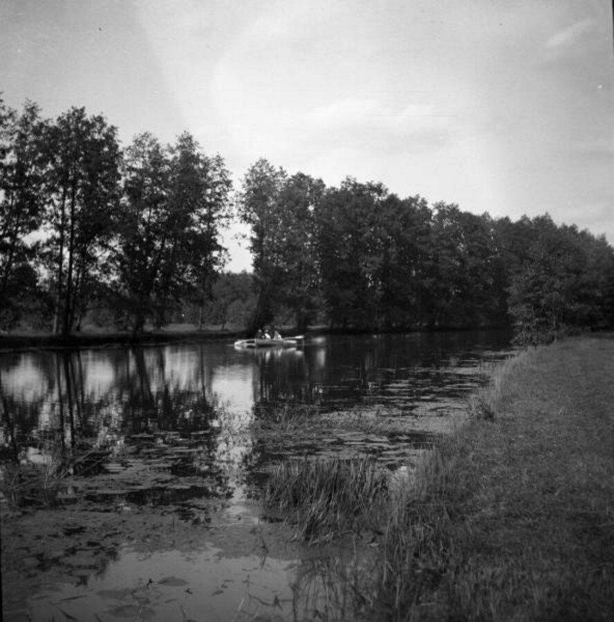 1904. Томилино. Река. Ряд уходящих вдаль деревьев. Лодочка