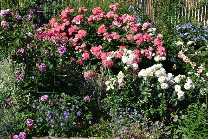 Mein schoner Garten и Cream Abundance