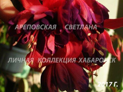 НОВИНКИ ФУКСИЙ. - Страница 5 0_1997dc_9cc5ec45_L