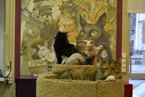 Что посмотреть в Питере - Достопримечательности Питера - Республика кошек