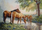 Igolka - Лошади у ручья.jpg