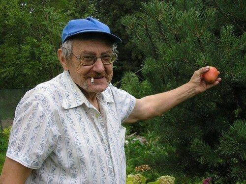 P1010213 Володя сорвал яблоко с сосны..jpg