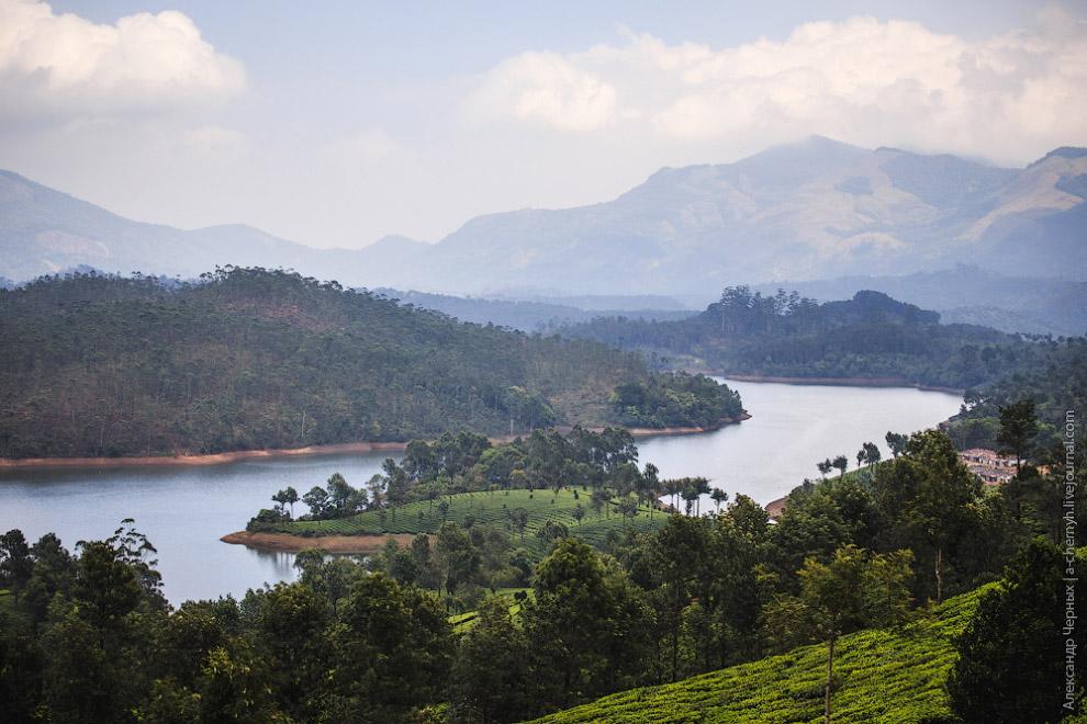 Чай на плантациях Муннара можно собирать раз в 15 дней, т.е. 24 урожая в год!