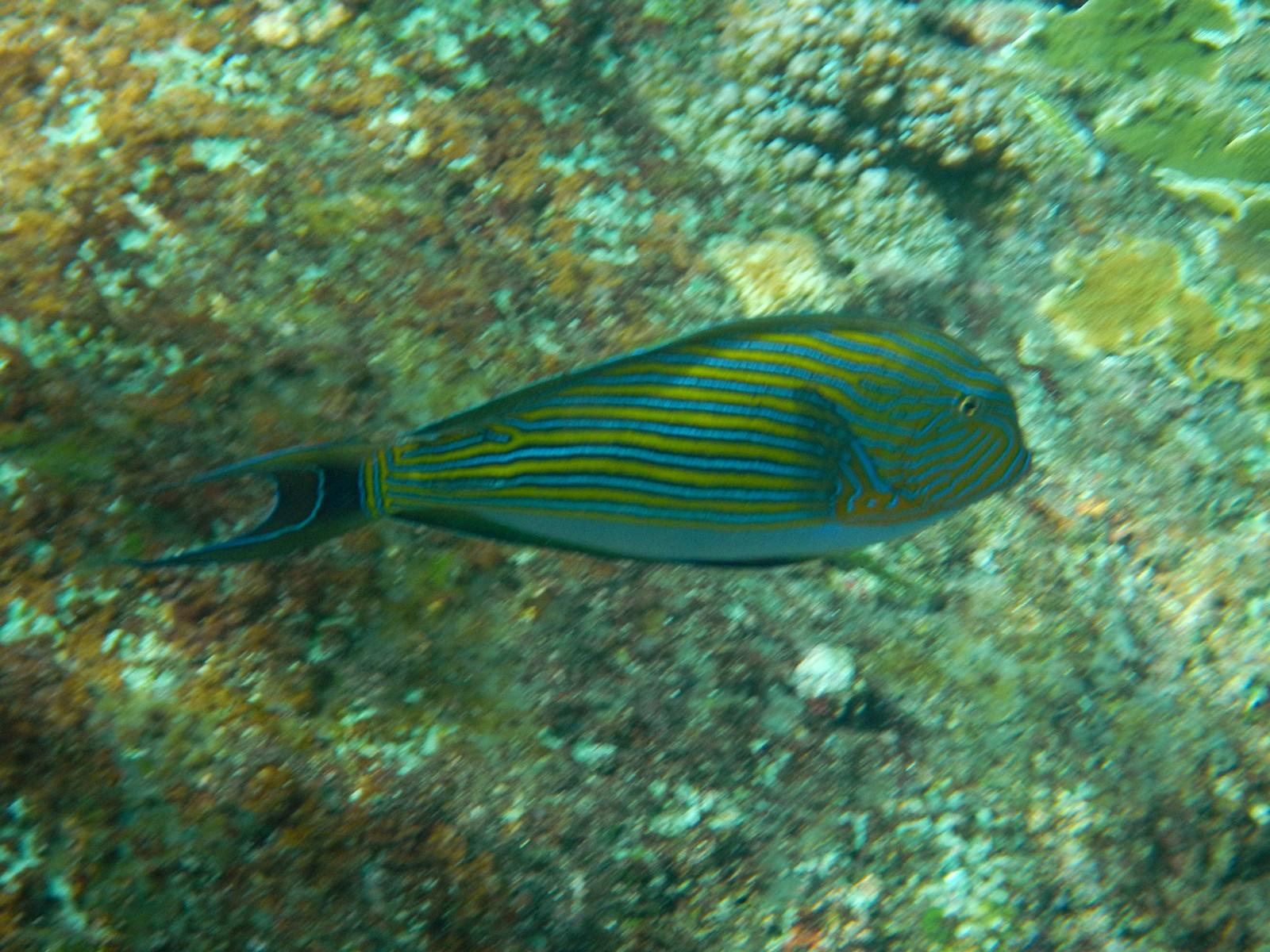 фото названием с андаманском в рыбы море