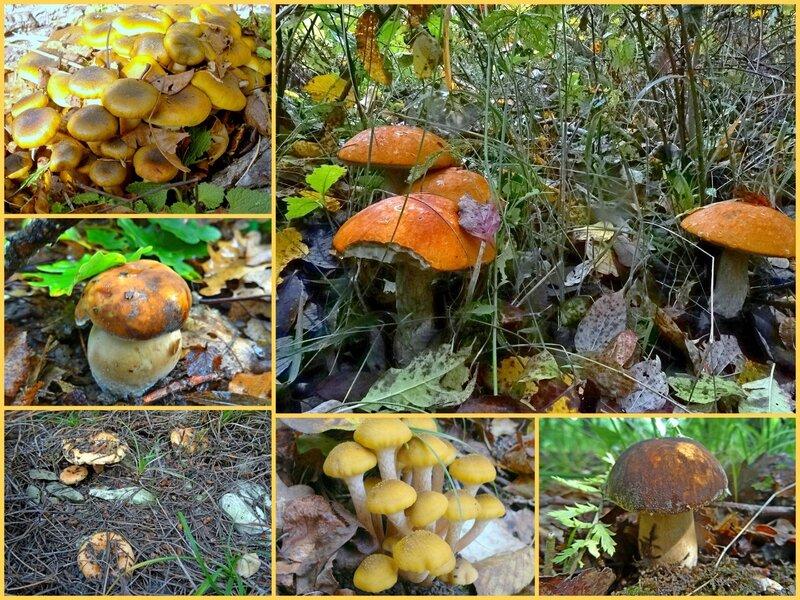 грибы на кубани осень 2016 фото