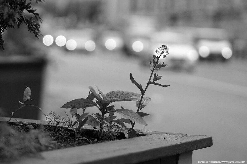 Проспект Мира. 25.06.17.05чб..jpg
