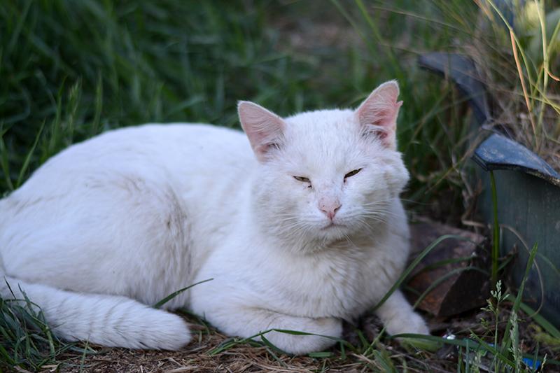 31 мая кот.jpg