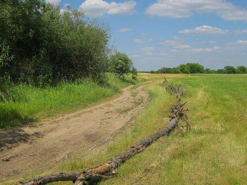 Полевая дорога и ее ограждение