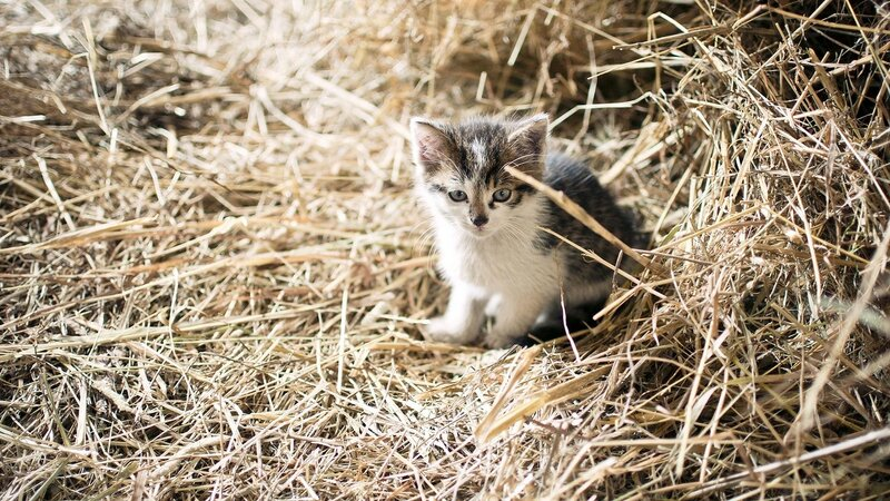 cute-cat-hiding-in-rick-of-straw-wallpaper-2560x1440-5388526f86184.jpg