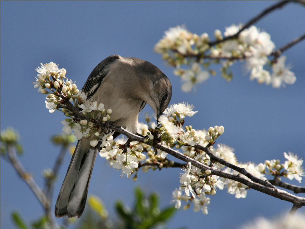 bird-on-a-branch-8126.jpg