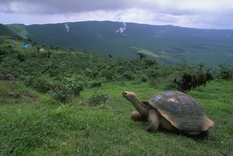 Черепаха на схилі
