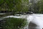 После майского снегопада