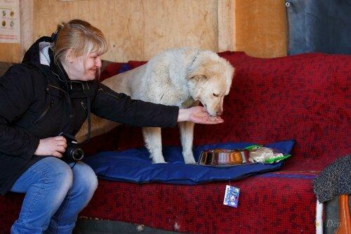 Голди собака из приюта догпорта