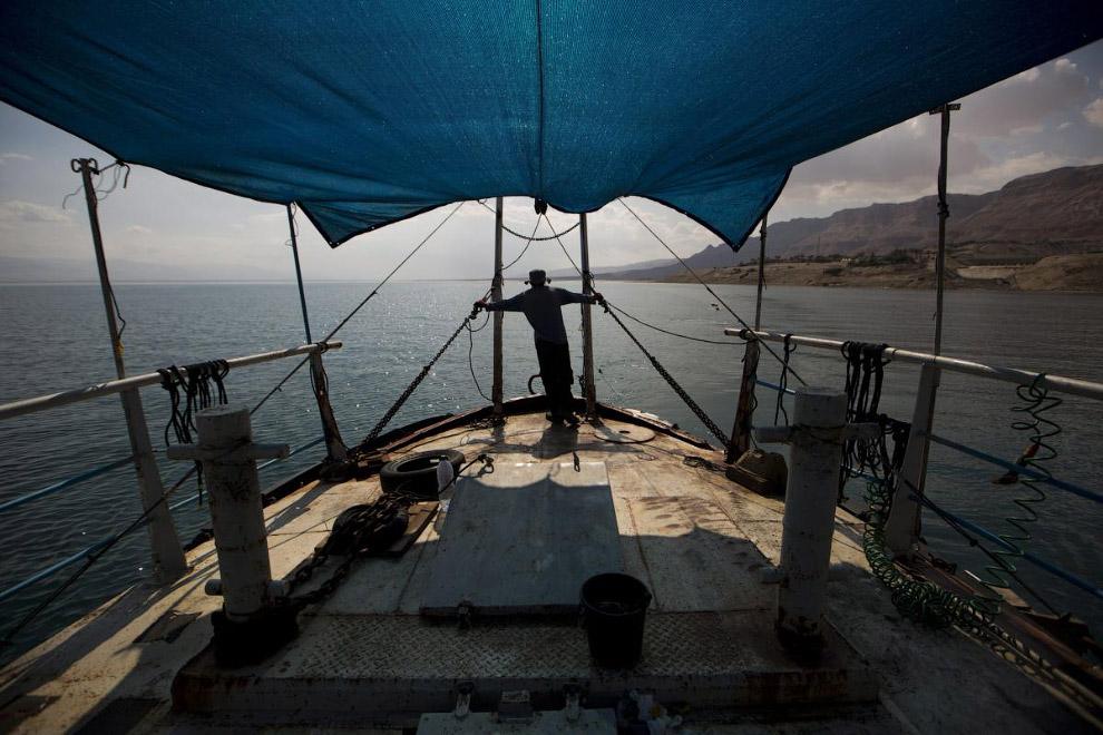 6. Мертвые пальмы на побережье Мертвого моря. (Фото Abir Sultan):