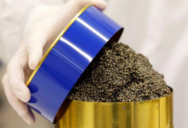 Производство чёрной икры (17 фото)