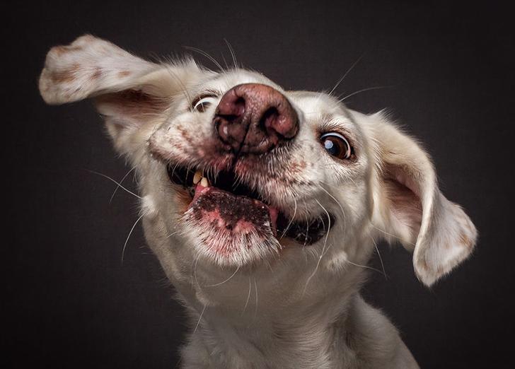 Захочешь вкусняшку — и не так раскорячишься: смешные собаки ловят еду (13 фото)