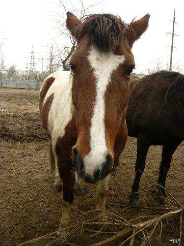 Рыжая лошадка