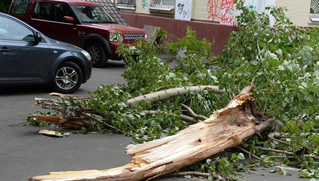 МЧС предупредило обусилении ветра в российской столице