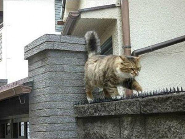 Шипы против котов