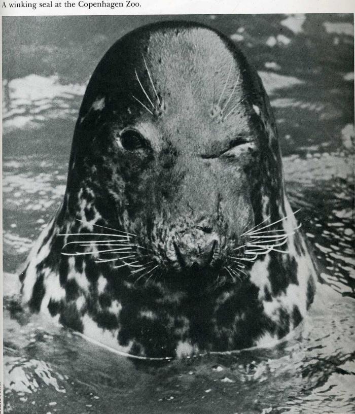 Фотографии из американских журналов