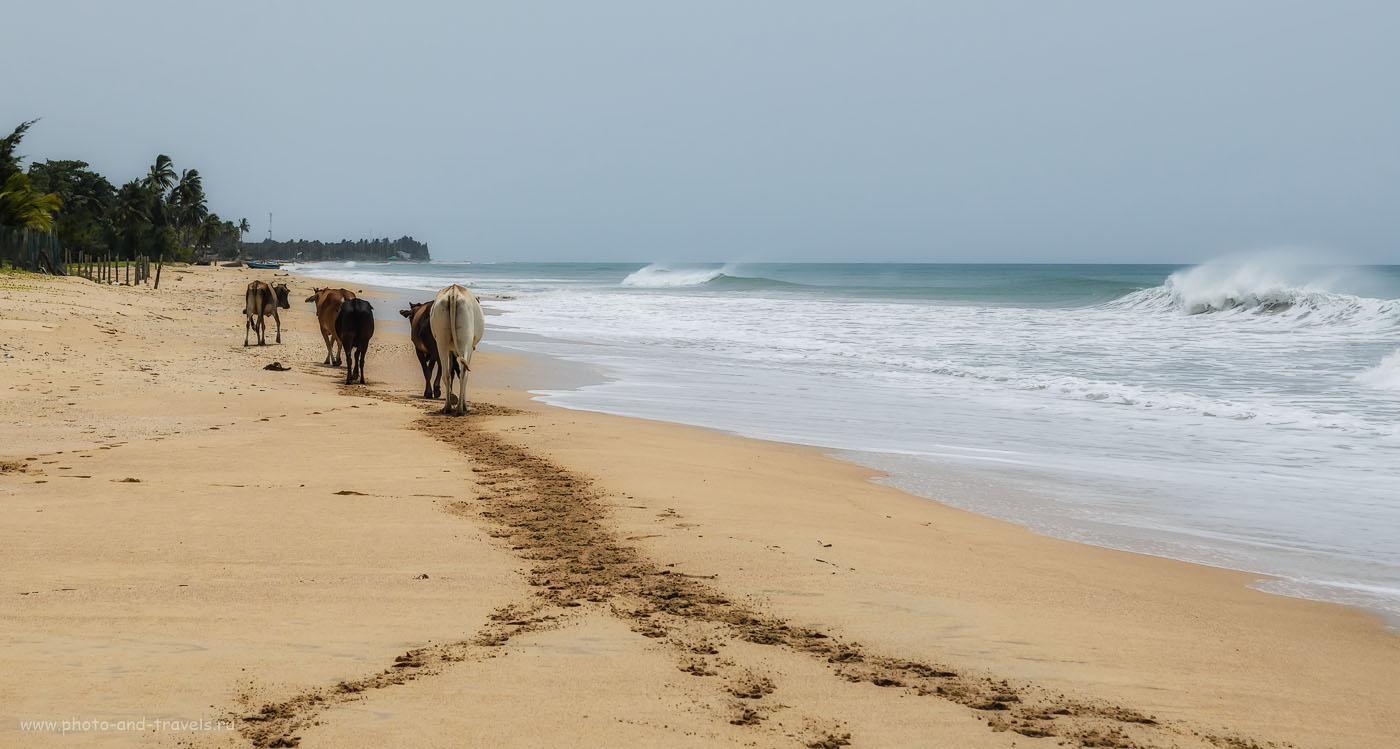 Фото 1. Пляж Nilaveli не такой уж и пустынный, как я рассказываю в своем отчете о самостоятельной поездке по Шри-Ланке на машине. Отзывы туристов об отдыхе в мае. Все снимки сняты на зеркальный фотоаппарат с КИТовым объективом Nikon D5100 KIT 18-55.