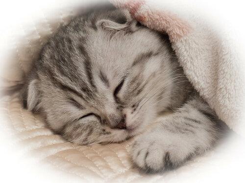 Снов картинка котенок сладких