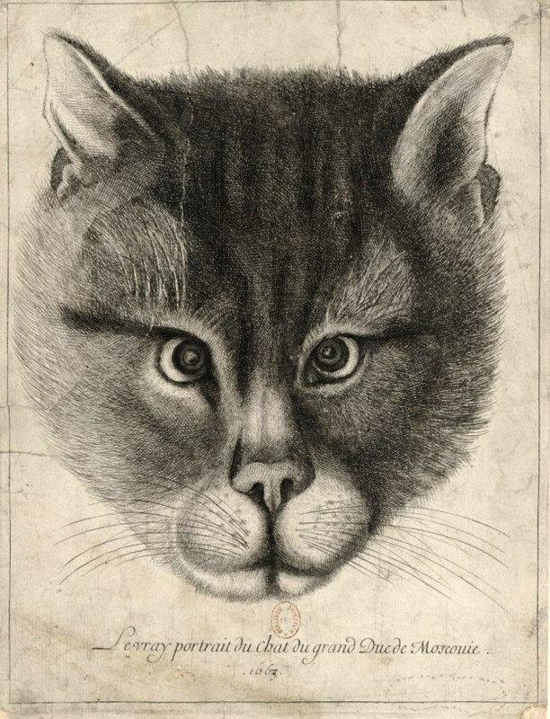 Вацлав Холлар - Подлинный портрет кота великого князя Московии, или Подлинное изображение кота великого князя Московского (1663)