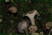 http://img-fotki.yandex.ru/get/52790/15842935.37d/0_eab64_6b67741_orig.jpg