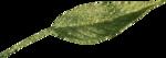Microferk_MerryMerry-leaf1.png