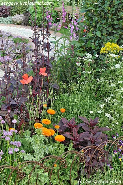 A modern Apothecary Garden (2).jpg
