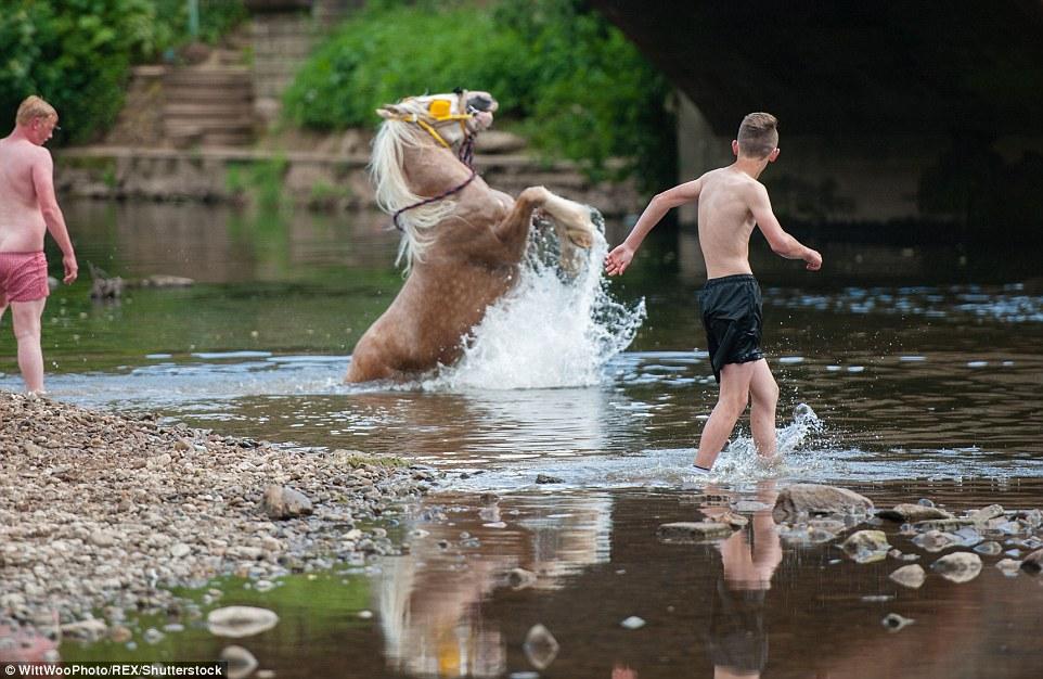 Лошадь встает на дыбы во время купания в реке Иден.