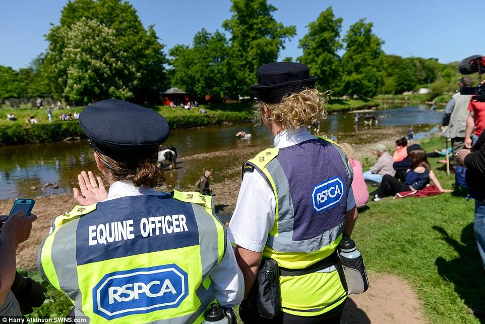 Сотрудники Королевского общества защиты животных прибыли на ярмарку с целью убедиться, что с лошадьм