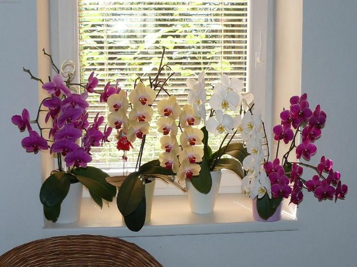Создай орхидее перепад температур: поставь горшок на ночь в прохладное место (до 15 градусов). Сокра